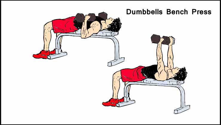 Chest Workout For Men in Hindi Dumbbells Bench Press