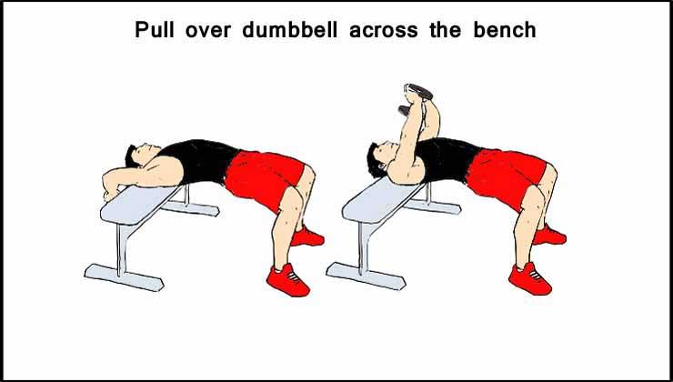 Pull Over Dumbbell Across the Bench