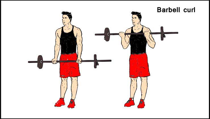 Biceps Workout in Hindi Barbell curl
