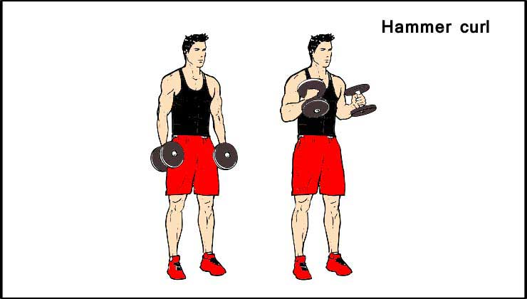 Biceps Workout in Hindi Hammer curl