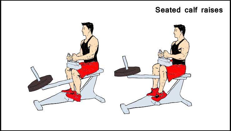 Leg Workout in Hindi Seated Calf raises