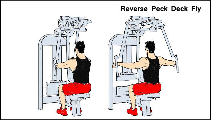 Reverse Peck Deck Fly For Shoulder Exercise