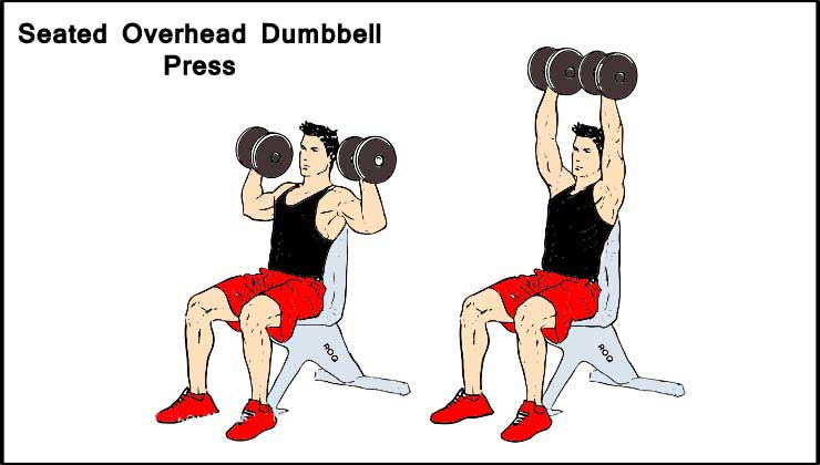 Seated Overhead Dumbbell Press For Shoulder Exercise