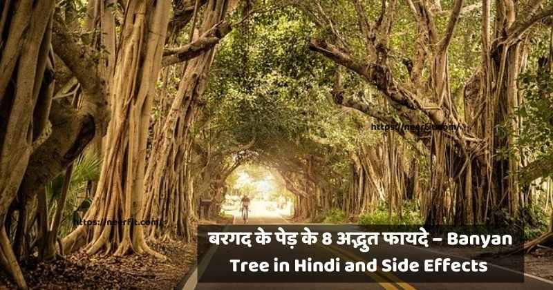 banyan tree in hindi