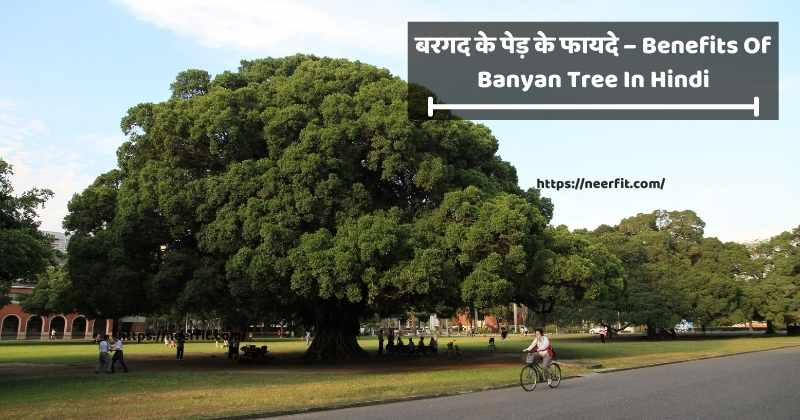 Benefits of Banyan Tree in Hindi